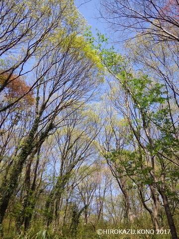 2017春の雑木-3_1.jpg