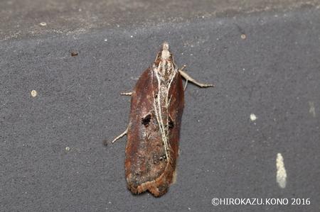 トサカハマキ0216-1_1.jpg