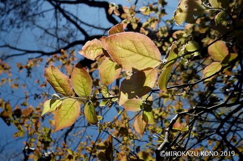 春景色0413-3_1.jpg