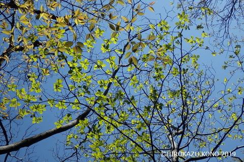 春景色0413-4_1.jpg