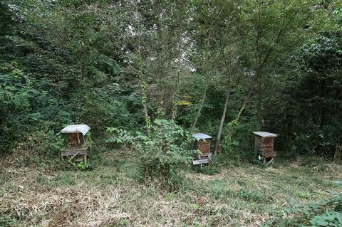養蜂1013.JPG